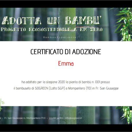 SOGREEN adotta un bambù - progetto ecosostenibile a km-zero